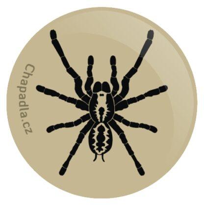 pavouk placka